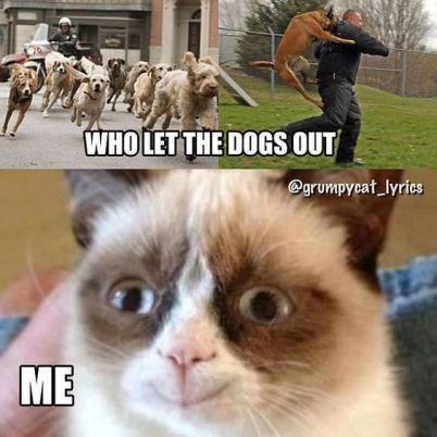 27-Grumpy-Cat-Funny-Memes-4-Grumpy-cat-Grumpy-cat-memes
